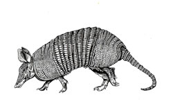 Armadillo Healing Adds Esalen Massages